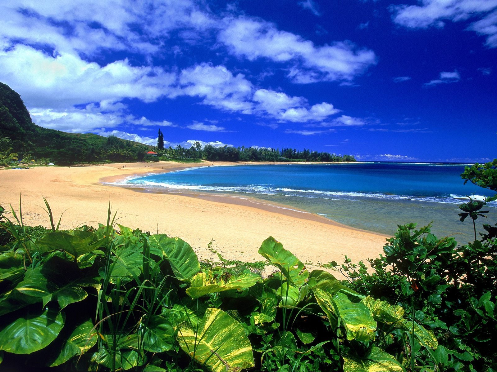 Kindness on Kauai - Life Coach Teresa Young